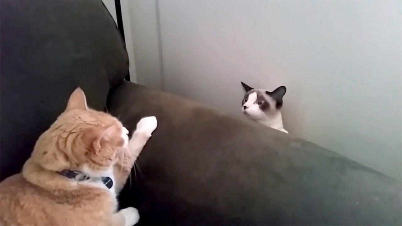 Cat Week Throwback Thursday Youtube
