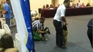Proud Mary Van Grunsven Best Puppy In Show, First Dog Show.mp4