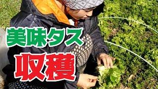 Gambar cover 前編 美味タスを収穫して、絶品料理を作る!!