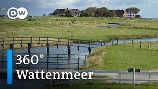 #360° Video: Wattenmeer | DW Reise
