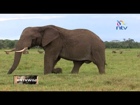"NTV Wild Talk S3 E8 ""Giving Back to Conservation''"