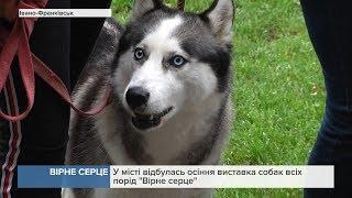 У місті відбулась осіння виставка собак усіх порід