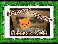 Hamster  Cagetour Februar 2018 (Hachiko)