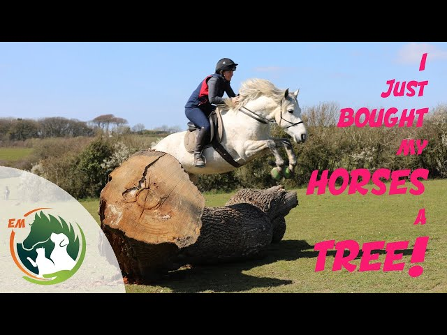 I just bought my horses a tree!