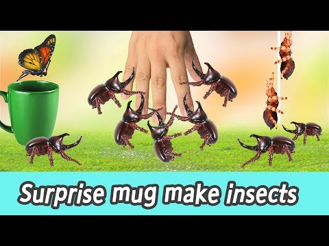 [EN] Surprise mug make insects!! kids numbers education, learn insects names, collecta #135ㅣCoCosToy
