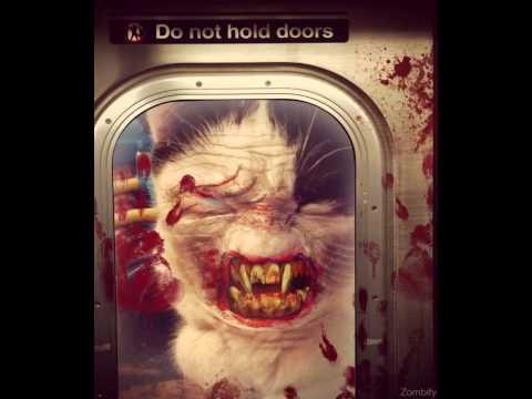 Gatos zombis
