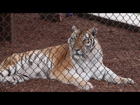 We Went To A Big Cat Reserve For A Behind The Scenes Tour! | Central Florida Animal Reserve!