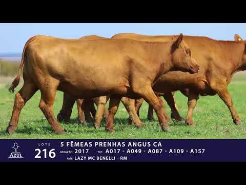 LOTE 216 - TAT A017,A049,A087,A109,A157