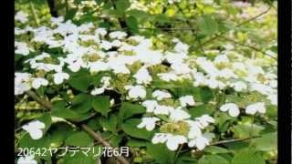 いなべ市に咲く花とその果実 #03