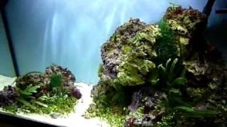125 Litre Planted Marine Aquarium