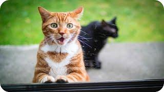 Смешные Кошки 2016! (#12) Веселая Видео Подборка! Смешные Животные 2016/