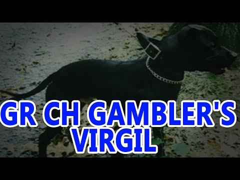 GR CH GAMBLER'S VIRGIL (5XW) ROM (pedigree)