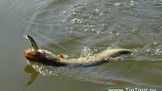 Как ловить щуку видео  Чем ловить щуку видео смотреть бесплатно  Рыбалка на щуку смотреть