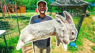I Bought the WORLD'S LARGEST RABBIT for my BACKYARD FARM!!! (Exotic Animal Auction)