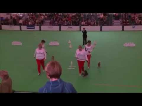 Chihuahua Obedience - Obreedience Competition Crufts