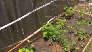 How To Make A Cheap And Easy Garden Trellis.