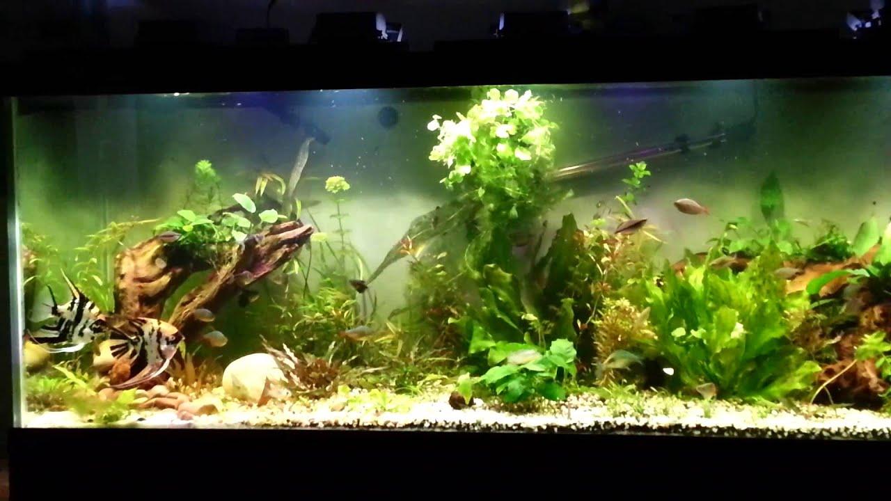 125 Gallon Aquarium Tank With Led Floodlights