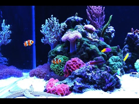 relax full hd nano reef aquarium youtube. Black Bedroom Furniture Sets. Home Design Ideas