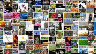 Nový vyhledávač poradí s obrázky, které můžete bezplatně použít