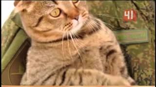 Кот-солдат