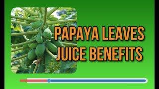 Top Papaya Leaves Juice Benefits