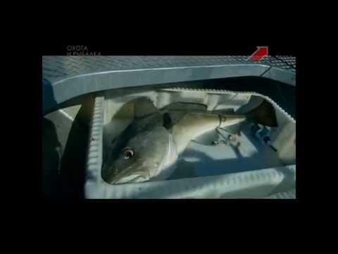 на морскую рыбалку в норвегию в первый раз