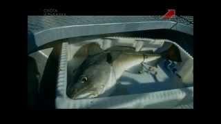 Морская рыбалка в Норвегии. Остров Сороя. Фильм Первый(Стрим ТВ