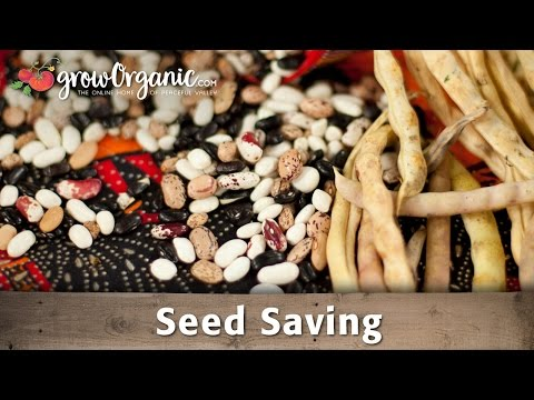 How to Save and Use Seeds From Your Own Fruits and Vegetables