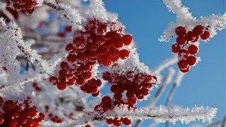Ярко Красная Рябина - Стихи