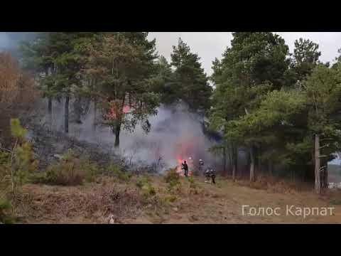 Голос Карпат: Горить ліс біля Сільця на Закарпатті - Голос Карпат