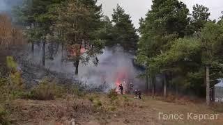 Горить ліс біля Сільця на Закарпатті - Голос Карпат