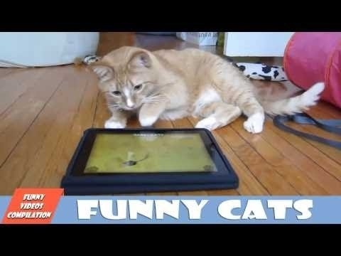 Smart Cats - Very Smart Cats Funny Video Compilation 2015