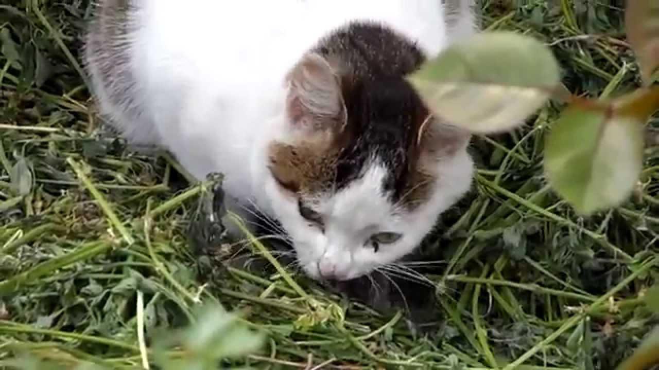Видео кота и птицы