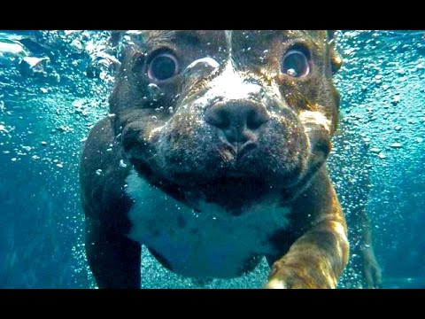 SHOCKING What They're Doing with Water to Pit Bulls in Detroit - Hope For Dogs Like My DoDo