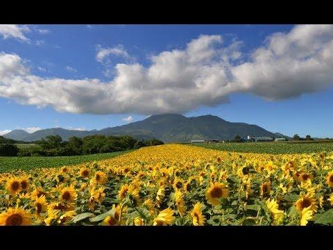 TkyoRants: JAPANESE SUMMER SUCKS