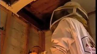 Video The Big Sting--Aggressive Killer Bees! download MP3, 3GP, MP4, WEBM, AVI, FLV November 2017