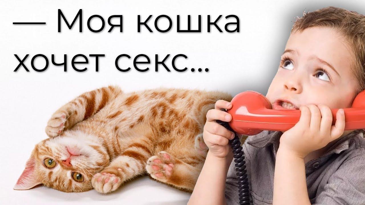 кошка просит секса что делать?