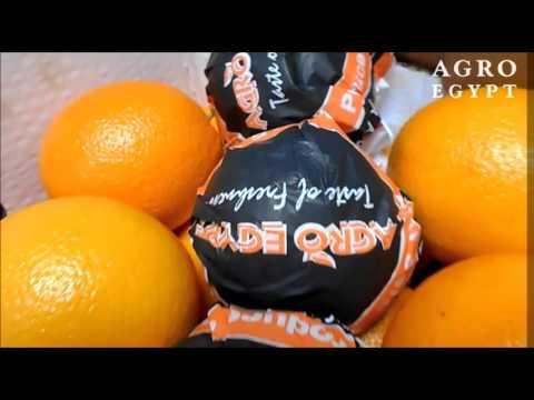 Valencia Oranges - AgroEgypt - February 2016
