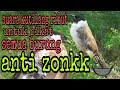 Suara Pikat Kutilang Ribut Kolibri Prenjak Untuk Mikat Semua Burung  Mp3 - Mp4 Download