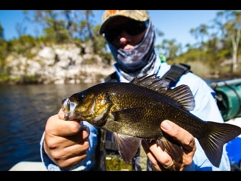 Bass Fly Fishing Tips - flying the stained river