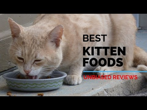 10 Best Kitten Foods 2020 | The Best Kitten Food | Unbiased Review & Ranking