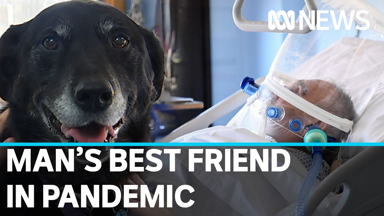 Could veterinary ventilators save humans in coronavirus crisis?   ABC News thumbnail
