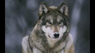 Das Wolfsjungen Kit! I SkyWars Kitserie #5