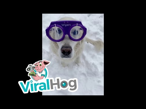 Hilary - You need these windshield wiper glasses for your pup!