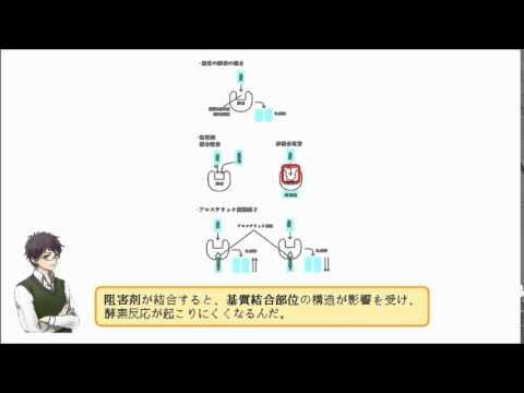 非競合阻害では 酵素反応の最大速度Vmaxは低下する ○or×
