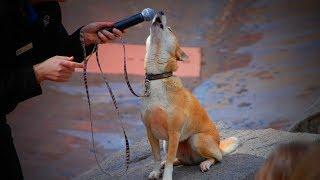 Dog Singing 🐶🎤Funny Dog Singing [Funny Pets]