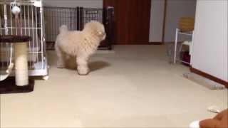 関連記事:http://bonpoodle.blog117.fc2.com/blog-entry-1176.html サ...