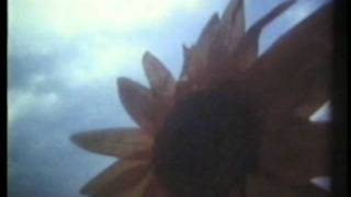 Zen TV - Neotropic - Sunflower Girl