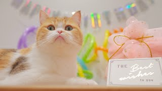 【 Kittens Prepared Mystery Birthday Gifts for Mom Cat 】Happy 3rd Birthday to Belly  Lucky Pawison