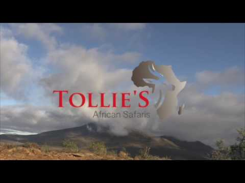 Tollie's African Safaris|Buffalo Hunt|Wildlife Video Productions